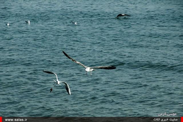 ساحل-دیر (۱۲)