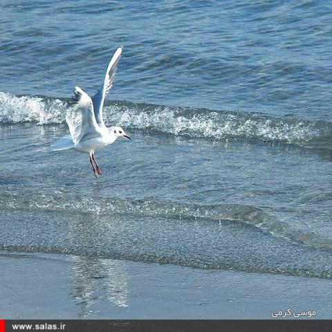 ساحل-دیر (۱۳)