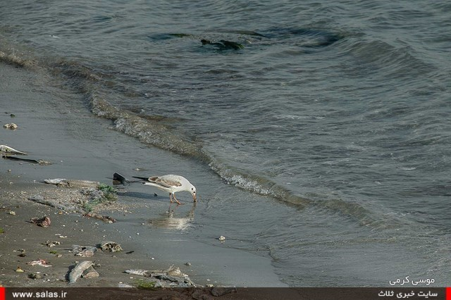 ساحل-دیر (۹)