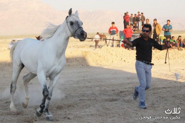 اسبدوانی اهرم (۱۳)